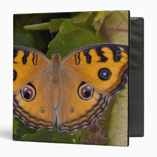 SE Asia, Thailand, Krabi, The Peacock Pansy Vinyl Binders