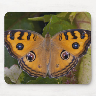 SE Asia, Thailand, Krabi, The Peacock Pansy Mouse Pad