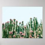 Se ruboriza el cactus póster