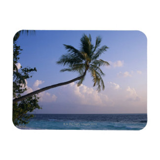 Sea and Palm Tree Magnet