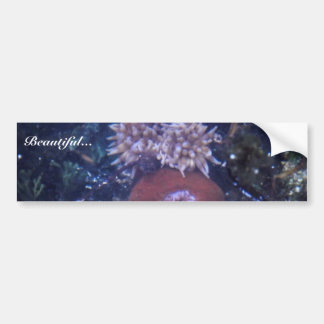 sea anemone car bumper sticker