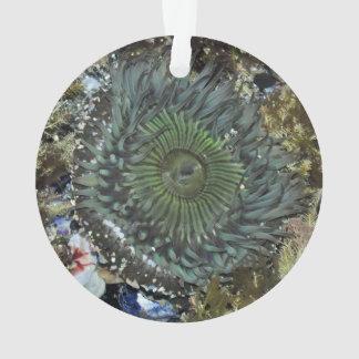 Sea Anemone Christmas Ornament