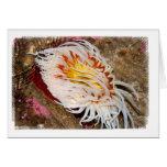 Sea anemone greeting cards