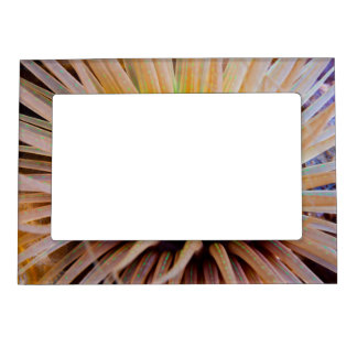Sea Anemone Magnetic Picture Frame