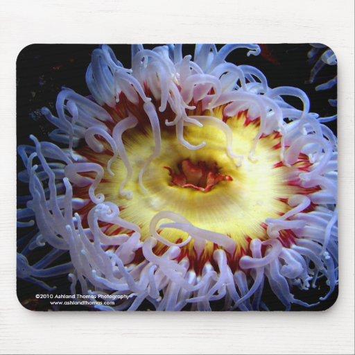 Sea Anemone Mouse Pad