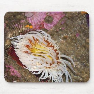 Sea anemone mousepad