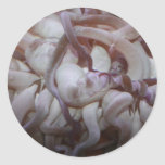 Sea anemone tentacle closeup sticker