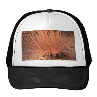 Sea Anemone Trucker Hat