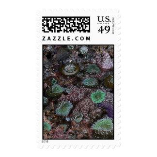 Sea Anemones and Starfish Stamp