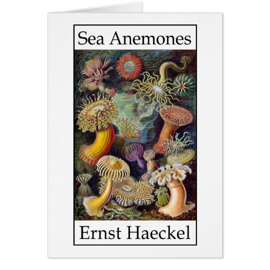 Sea Anemones by Ernst Haeckel Card