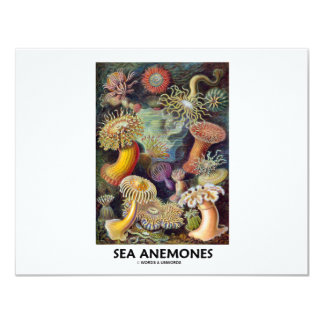 Sea Anemones Card