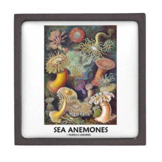 Sea Anemones Jewelry Box
