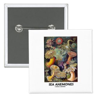 Sea Anemones Pins