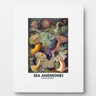 Sea Anemones Plaque