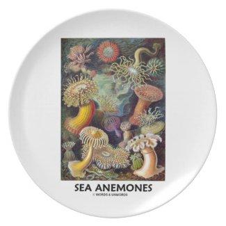 Sea Anemones Plate
