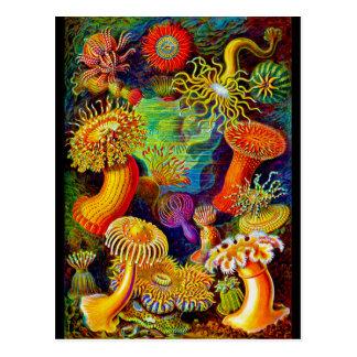 Sea Anemones Post Card