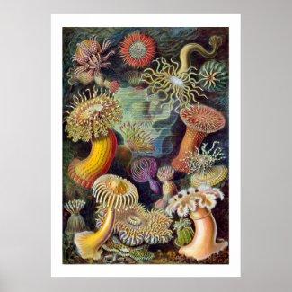 Sea Anemones Poster print