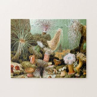Sea Anemones Jigsaw Puzzle