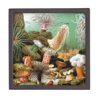Sea anemones underwater scene gift box
