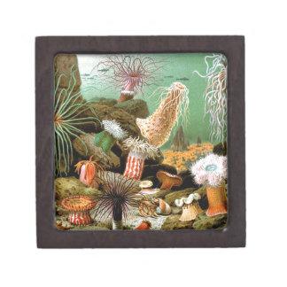 Sea anemones underwater scene jewelry box