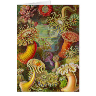 Sea Anemones Vintage Illustration Card