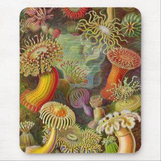 Sea Anemones Vintage Illustration Mouse Pad