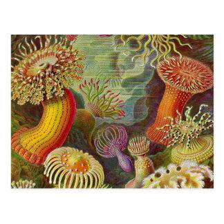 """""""Sea Anemones"""" Vintage Illustration Post Card"""