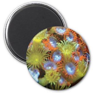 sea animal plants magnet