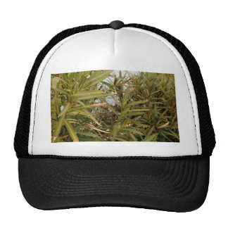 Sea behind the plants trucker hat