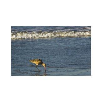 Sea Bird 2 wrappedcanvas
