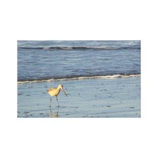 Sea Bird 4 wrappedcanvas