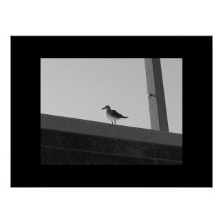 Sea Bird - Black & White with Black Border Poster