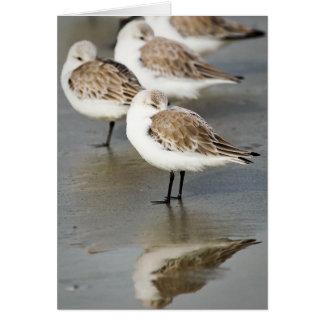 Sea Birds Greeting Cards