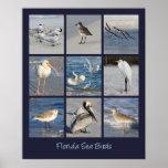 Sea Birds of Florida Photos Poster