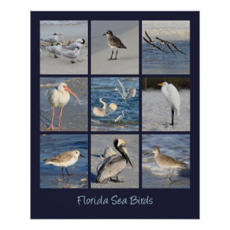 Sea Birds of Florida Photos Poster