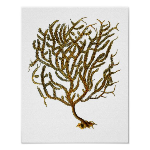 Sea Coral no. 11 Beach Decor Art Print