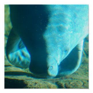 Sea Cow Poster