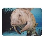 Sea Cow Swimming 5x7 Paper Invitation Card