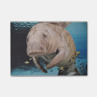 Sea Cow Swimming Post-it Notes