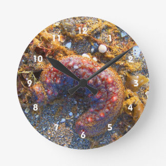 sea cucumber seaweed red creature round clock