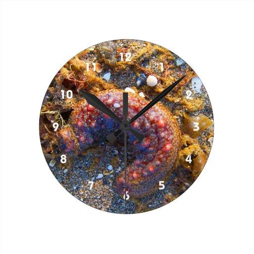 Zazzle sea cucumber seaweed red creature Round Clock