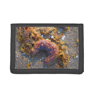 sea cucumber seaweed red creature trifold wallets