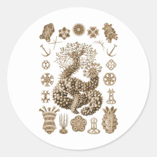 Sea Cucumbers Classic Round Sticker