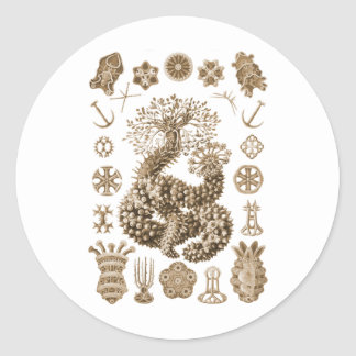 Sea Cucumbers Sticker