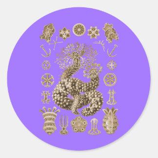 Sea Cucumbers Stickers