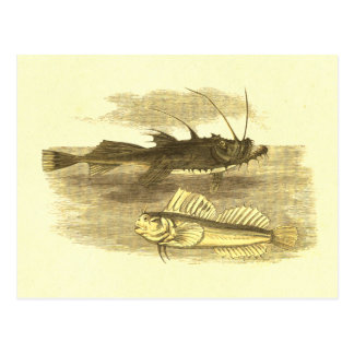 Sea Devil & Leaping Blenny Vintage Lithograph Postcard