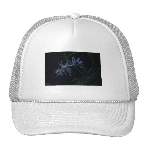 Sea Dragon Trucker Hat
