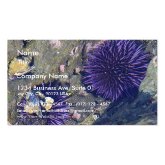 Sea Erchins Tidepools Double-Sided Standard Business Cards (Pack Of 100)