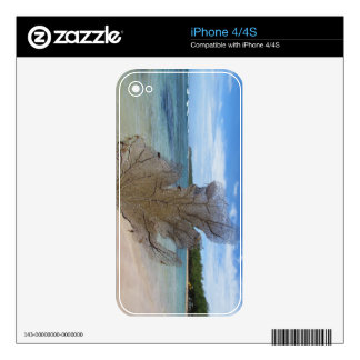 Sea Fan Decal For The iPhone 4S
