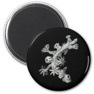 Sea fan magnet
